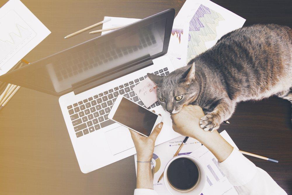 travail a la maison pour ou contre